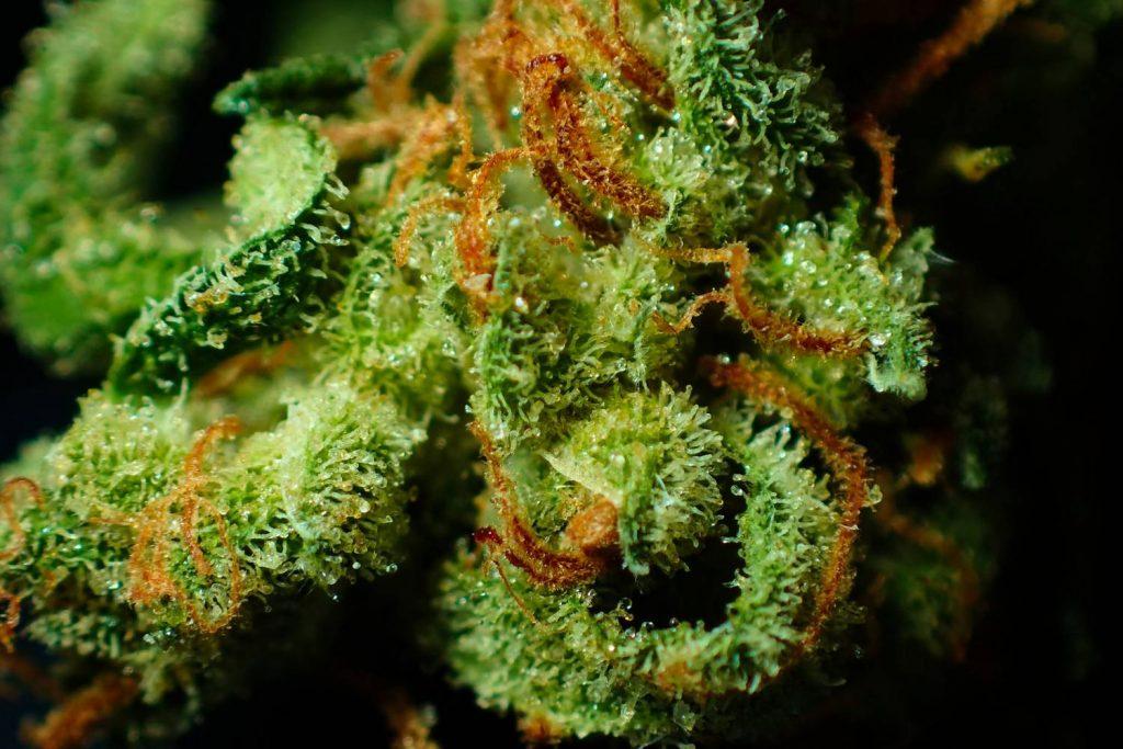 Jakie właściwości ma marihuana medyczna i do jakich celów jest stosowana?